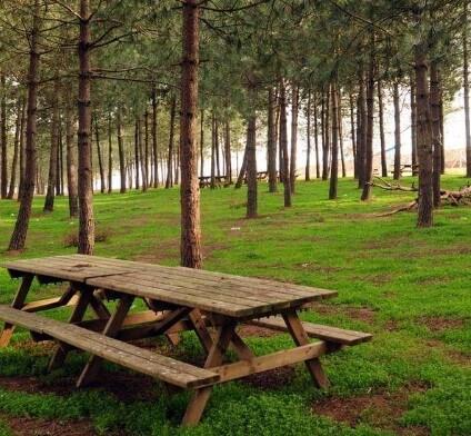Taşdelen Piknik Alanı